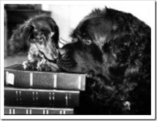 dogsandbooks-small
