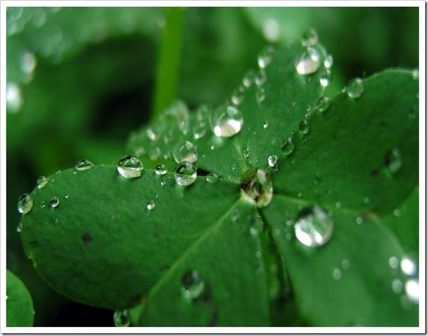 clover-drops-crop-2
